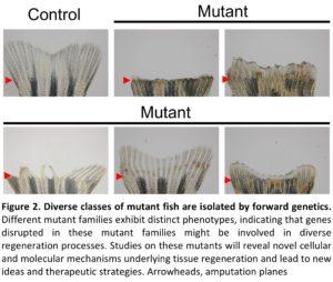 Kang, Junsu – Cell and Regenerative Biology – UW–Madison